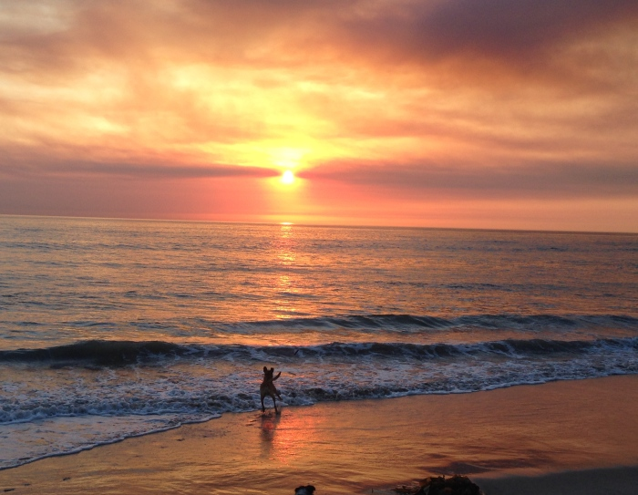 Sunset at the Dog Beach in Del Mar - A Daily Occurrence