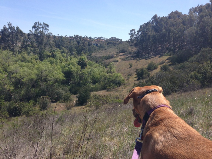 Chase checking out the canyon