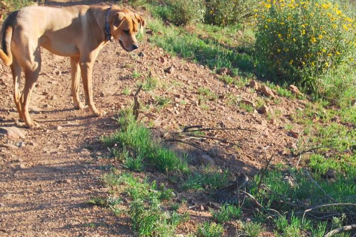 Chase and the snake, captured by my sister-in-law while keeping Sydney close on the leash